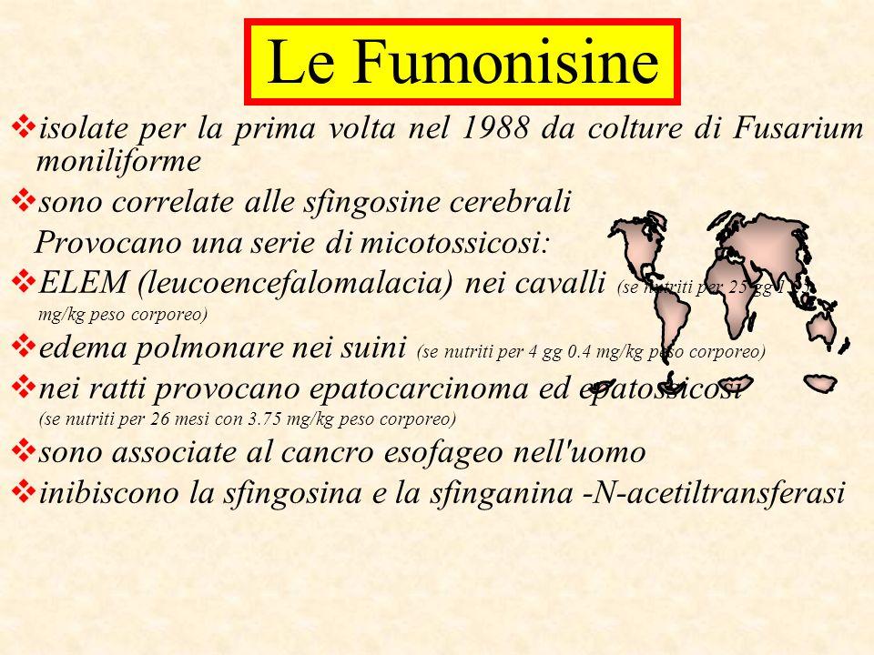 isolate per la prima volta nel 1988 da colture di Fusarium moniliforme sono correlate alle sfingosine cerebrali Provocano una serie di micotossicosi: