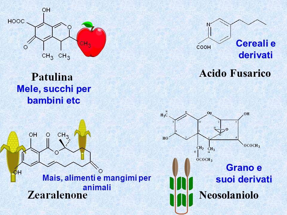 Acido Fusarico Neosolaniolo Mele, succhi per bambini etc Mais, alimenti e mangimi per animali Grano e suoi derivati Cereali e derivati