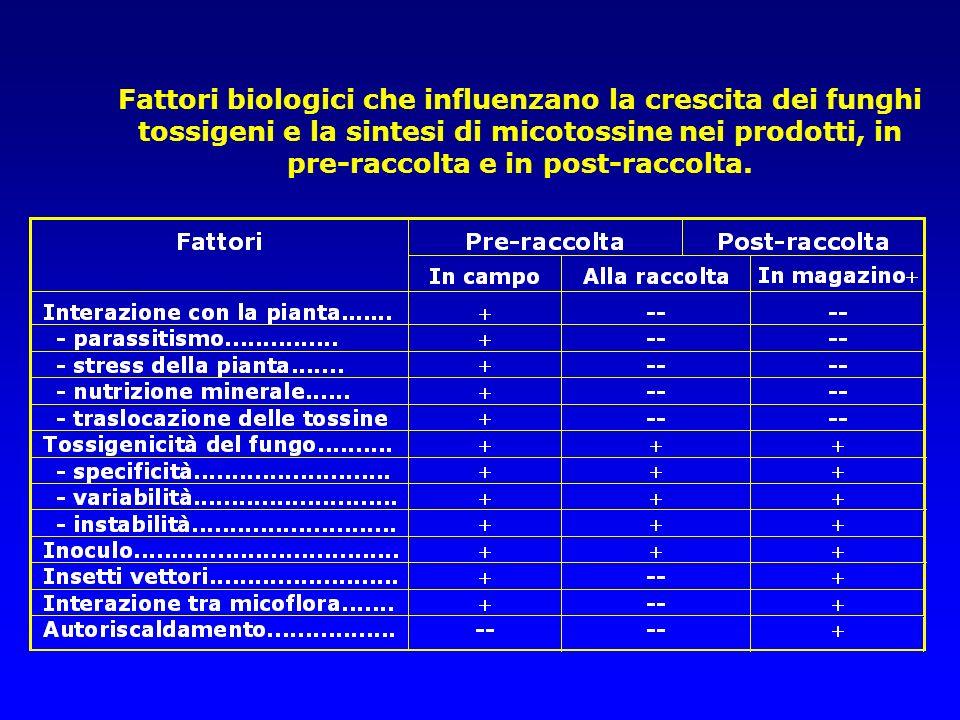 Fattori biologici che influenzano la crescita dei funghi tossigeni e la sintesi di micotossine nei prodotti, in pre-raccolta e in post-raccolta.