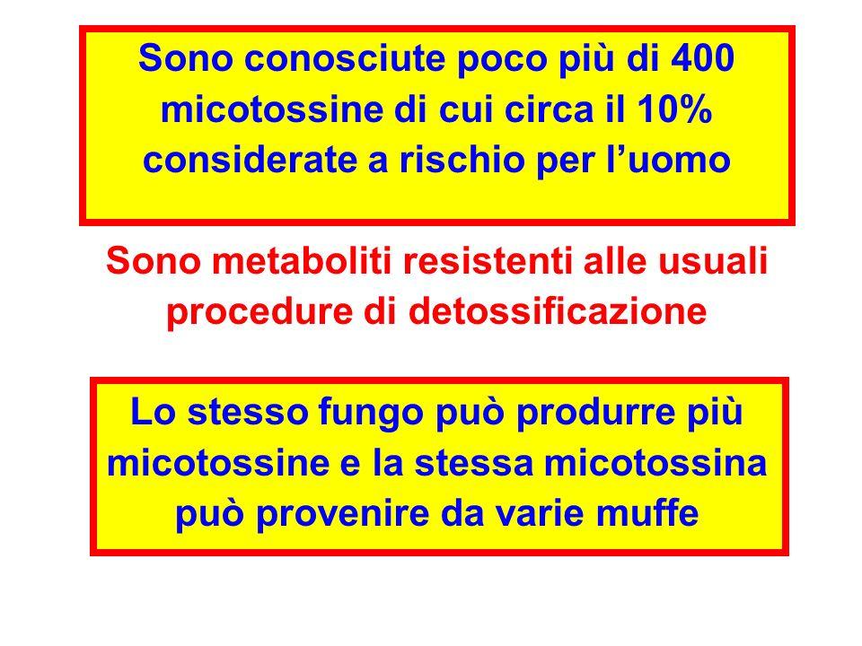 Sono conosciute poco più di 400 micotossine di cui circa il 10% considerate a rischio per luomo Sono metaboliti resistenti alle usuali procedure di de