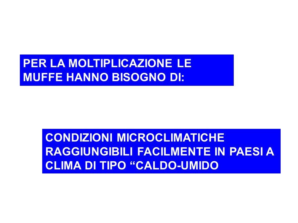Possibili vie di penetrazione delle Micotossine nella catena alimentare LATTELATTE