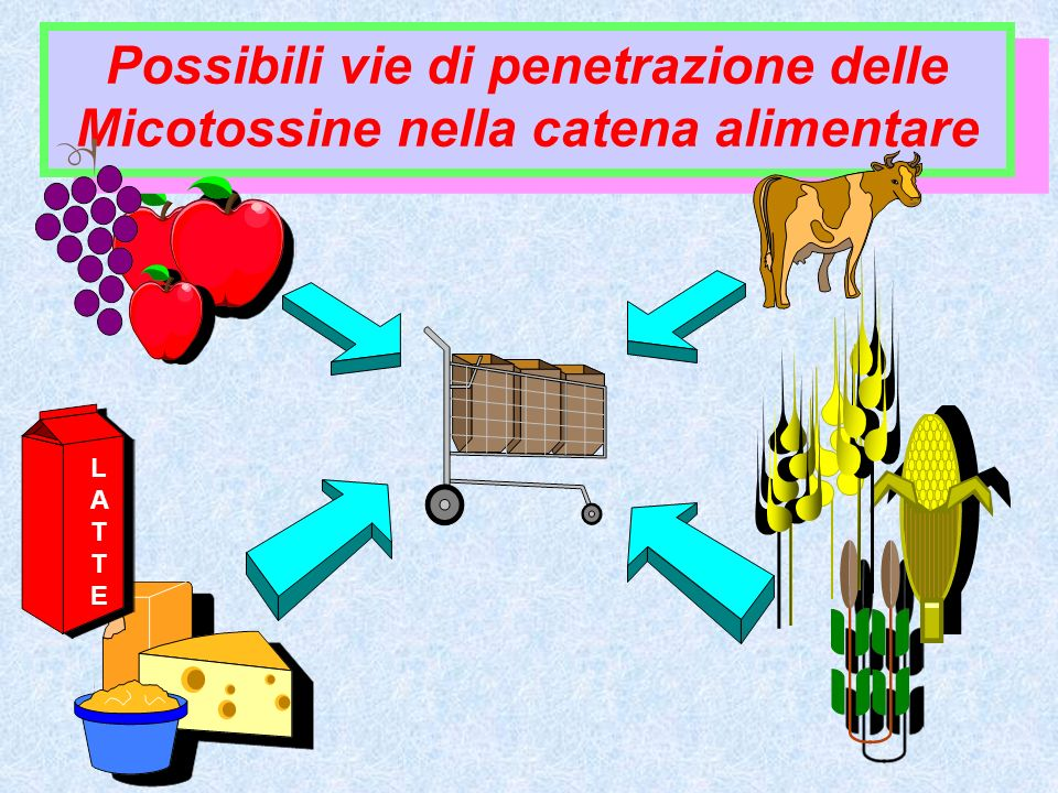 Le Micotossine sono prodotte da funghi microscopici noti come muffe (Penicillium, Aspergillus e Fusarium) che amano condizioni ambientali caldo/umido.