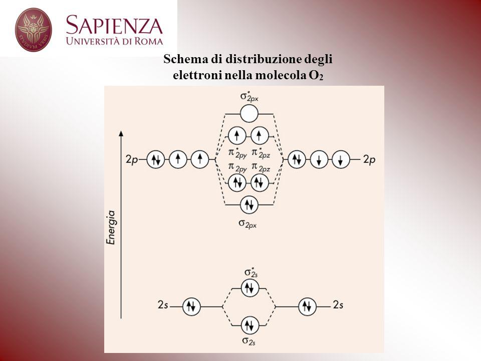 Schema di distribuzione degli elettroni nella molecola O 2