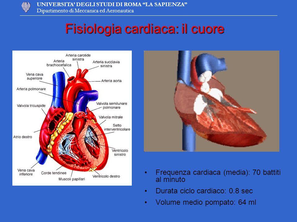 UNIVERSITA DEGLI STUDI DI ROMA LA SAPIENZA Dipartimento di Meccanica ed Aeronautica Sistole: periodo di contrazione in cui si ha lo svuotamento dei ventricoli Diastole: periodo di rilasciamento in cui si ha il riempimento dei ventricoli Il ciclo cardiaco CAMERA CARDIACAML DI SANGUE MAXPRESSIONE OPERATIVA Atrio sinistro450-12 mmHg Atrio destro650-5 mmHg Ventricolo sinistro90 (per m 2 di sup.