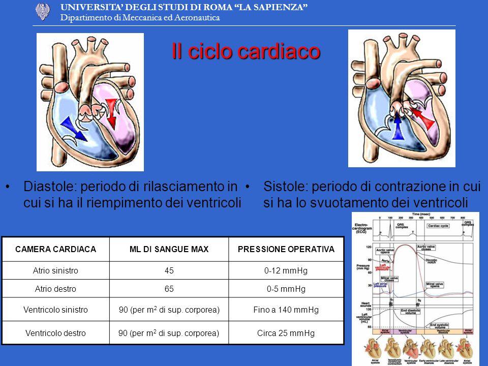 UNIVERSITA DEGLI STUDI DI ROMA LA SAPIENZA Dipartimento di Meccanica ed Aeronautica 1 1 2 2 3 34 4 Profili di velocità condotto aortico Periodo 9 secondi, Stroke Volume 64 ml Miglioramenti da apportare …
