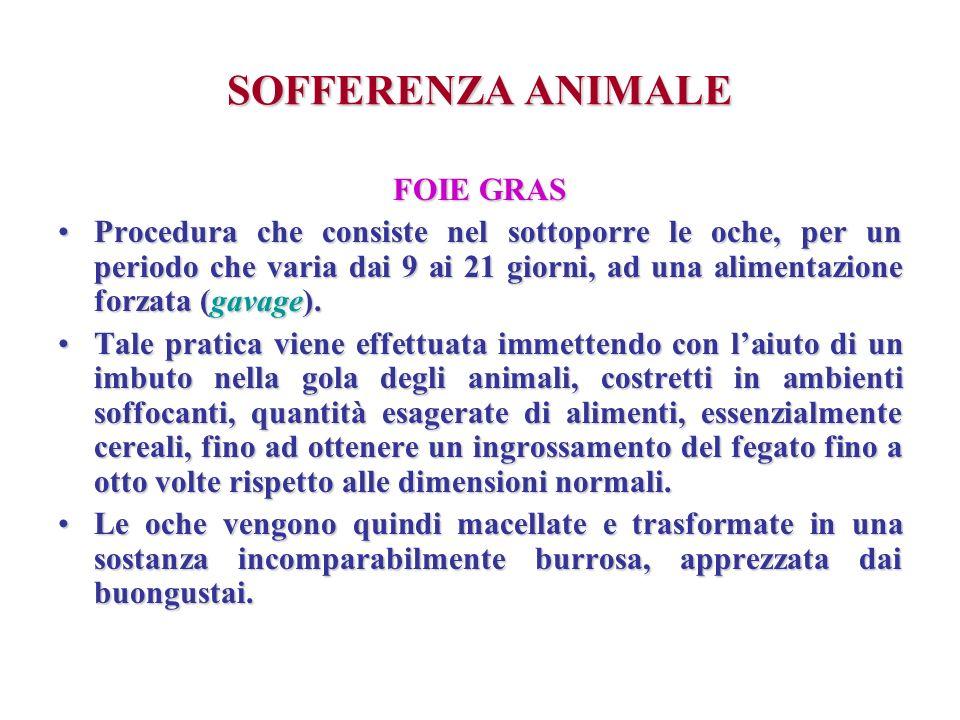 SOFFERENZA ANIMALE FOIE GRAS Procedura che consiste nel sottoporre le oche, per un periodo che varia dai 9 ai 21 giorni, ad una alimentazione forzata