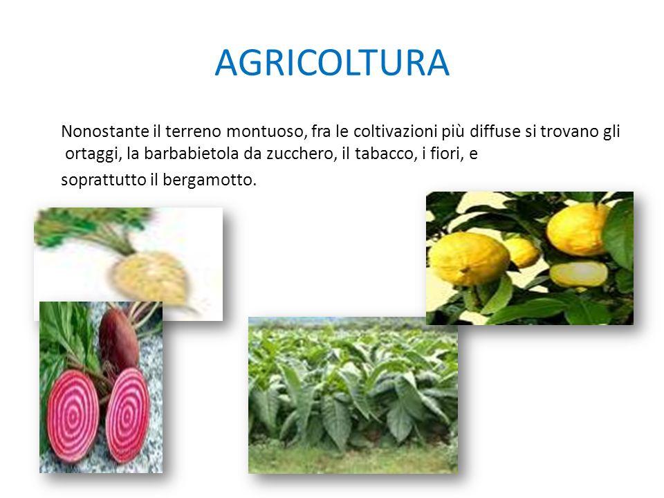 AGRICOLTURA Nonostante il terreno montuoso, fra le coltivazioni più diffuse si trovano gli ortaggi, la barbabietola da zucchero, il tabacco, i fiori,