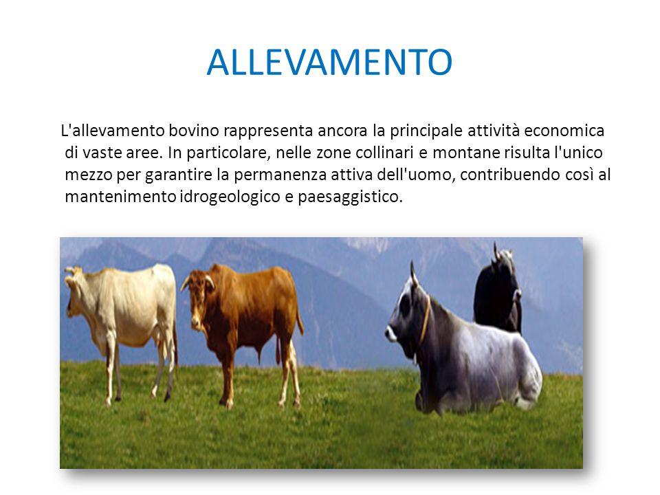 ALLEVAMENTO L'allevamento bovino rappresenta ancora la principale attività economica di vaste aree. In particolare, nelle zone collinari e montane ris