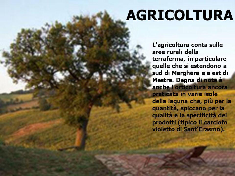 AGRICOLTURA L'agricoltura conta sulle aree rurali della terraferma, in particolare quelle che si estendono a sud di Marghera e a est di Mestre. Degna