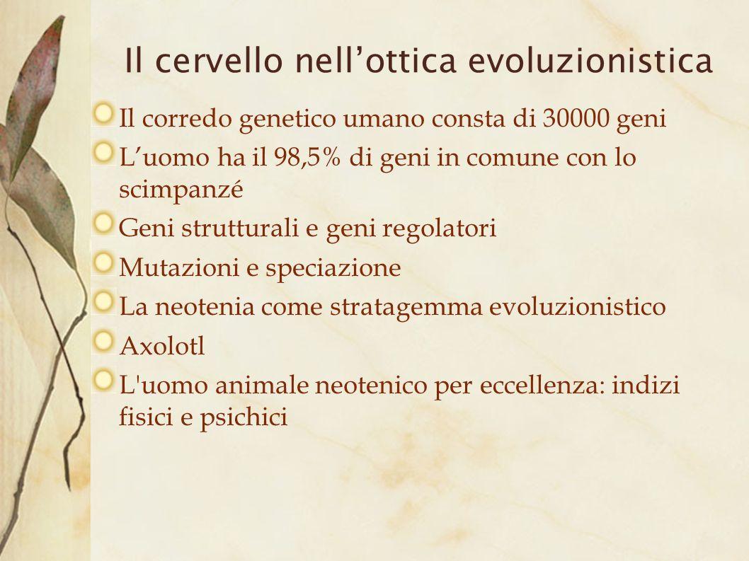 Il cervello nellottica evoluzionistica Il corredo genetico umano consta di 30000 geni Luomo ha il 98,5% di geni in comune con lo scimpanzé Geni strutt