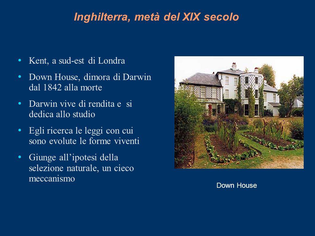 Inghilterra, metà del XIX secolo Kent, a sud-est di Londra Down House, dimora di Darwin dal 1842 alla morte Darwin vive di rendita e si dedica allo st