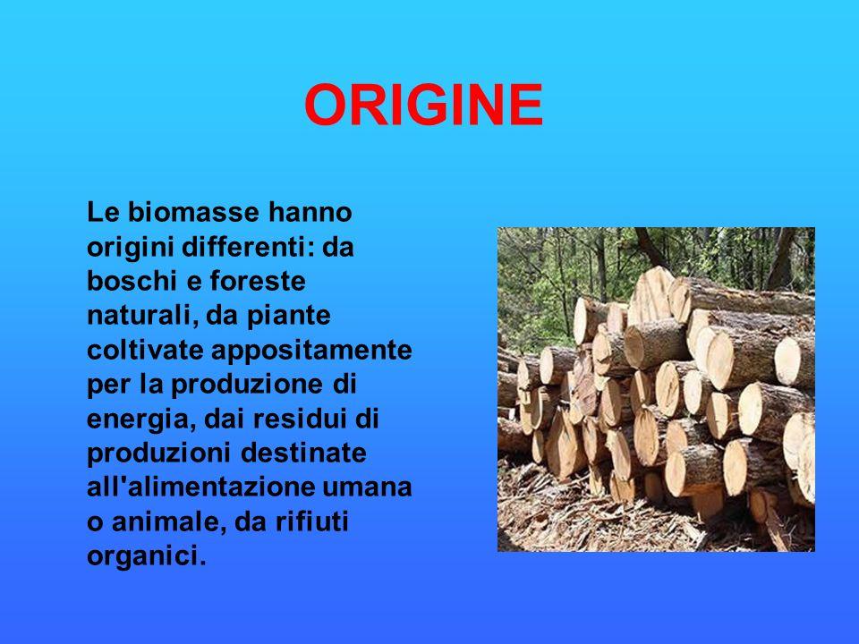 Le biomasse hanno origini differenti: da boschi e foreste naturali, da piante coltivate appositamente per la produzione di energia, dai residui di pro