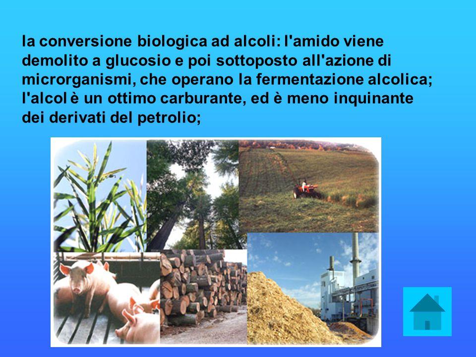 la conversione biologica ad alcoli: l'amido viene demolito a glucosio e poi sottoposto all'azione di microrganismi, che operano la fermentazione alcol