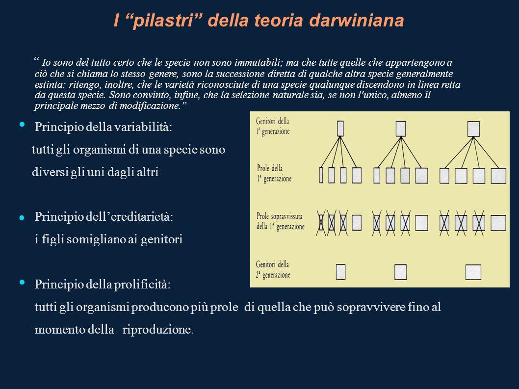 I pilastri della teoria darwiniana Io sono del tutto certo che le specie non sono immutabili; ma che tutte quelle che appartengono a ciò che si chiama