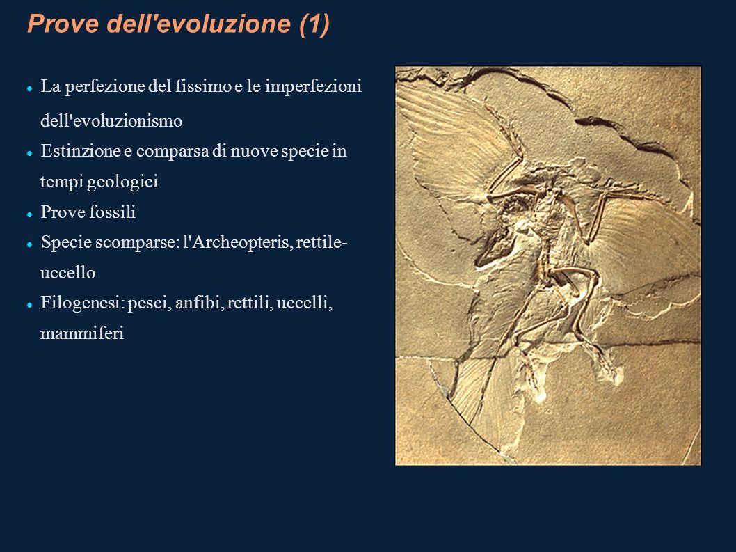 Prove dell'evoluzione (1) La perfezione del fissimo e le imperfezioni dell'evoluzionismo Estinzione e comparsa di nuove specie in tempi geologici Prov