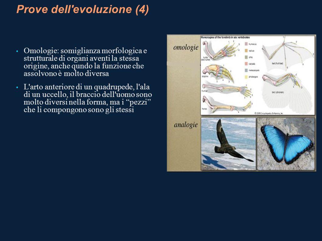 Prove dell'evoluzione (4) Omologie: somiglianza morfologica e strutturale di organi aventi la stessa origine, anche qundo la funzione che assolvono è