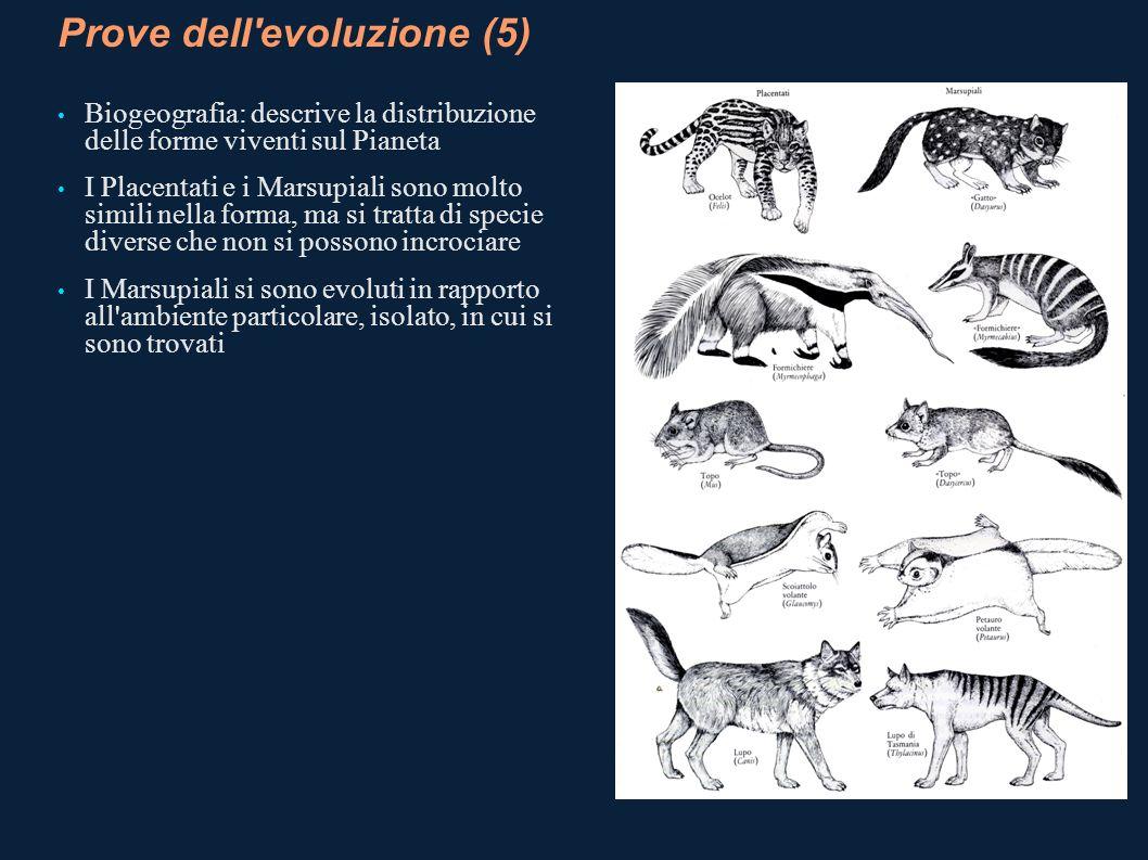 Prove dell'evoluzione (5) Biogeografia: descrive la distribuzione delle forme viventi sul Pianeta I Placentati e i Marsupiali sono molto simili nella
