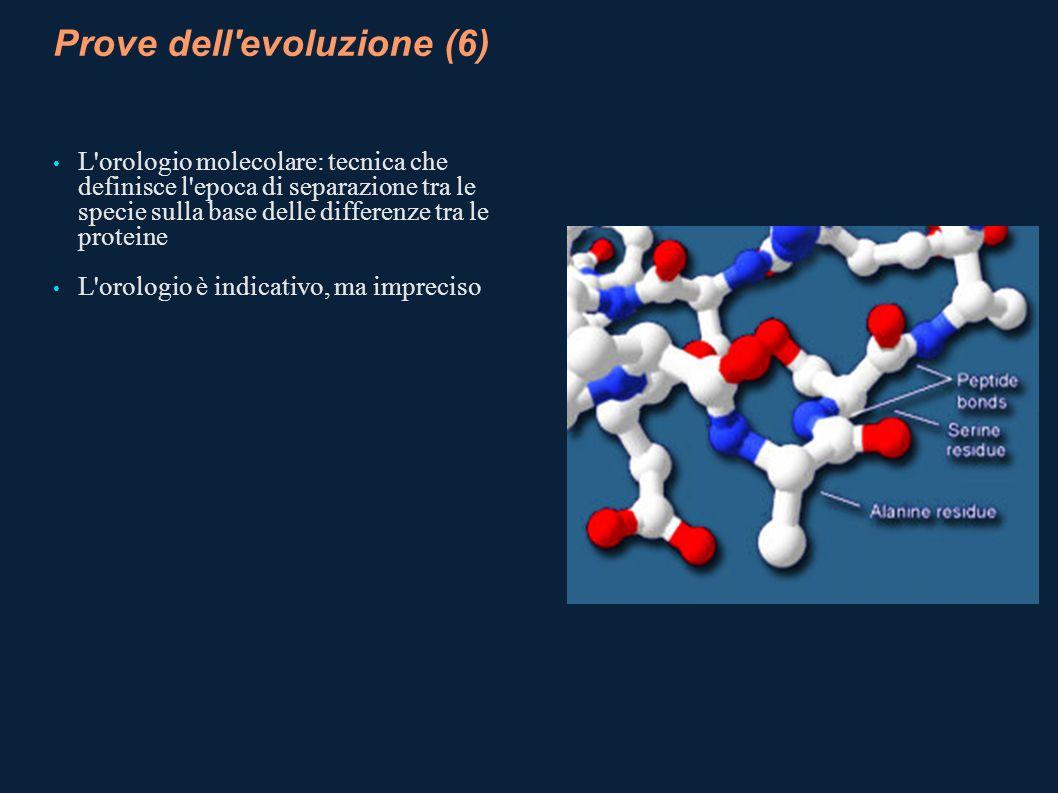 Prove dell'evoluzione (6) L'orologio molecolare: tecnica che definisce l'epoca di separazione tra le specie sulla base delle differenze tra le protein