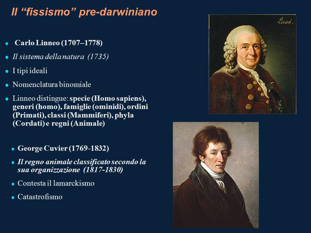Il fissismo pre-darwiniano Carlo Linneo (1707–1778) Il sistema della natura (1735) I tipi ideali Nomenclatura binomiale Linneo distingue: specie (Homo
