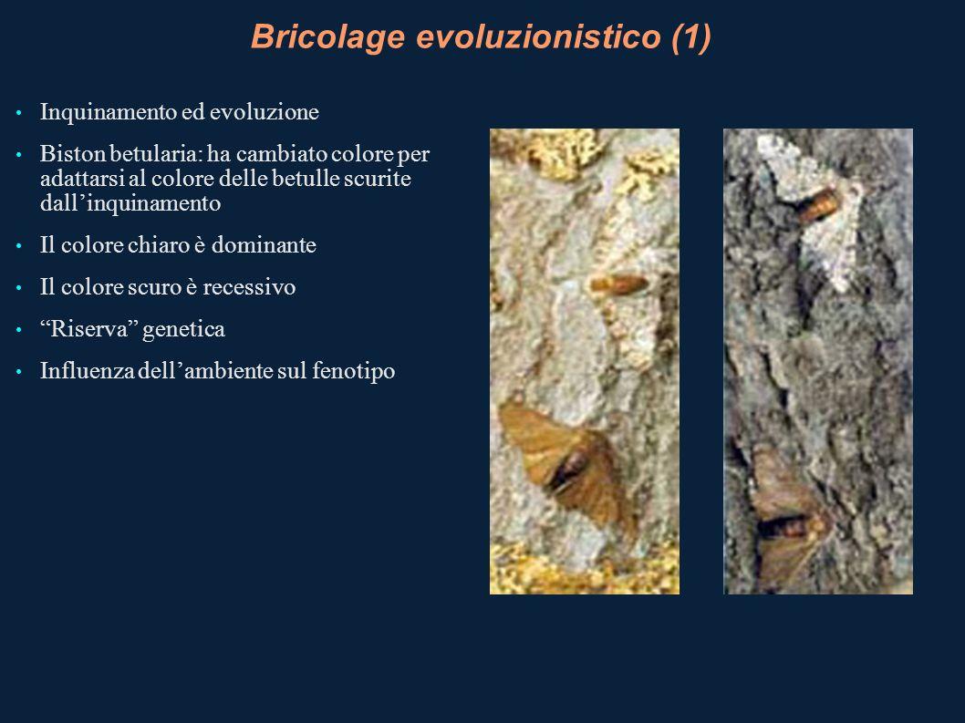 Bricolage evoluzionistico (1) Inquinamento ed evoluzione Biston betularia: ha cambiato colore per adattarsi al colore delle betulle scurite dallinquin