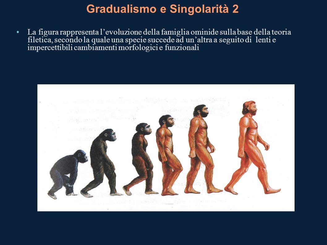 Gradualismo e Singolarità 2 La figura rappresenta levoluzione della famiglia ominide sulla base della teoria filetica, secondo la quale una specie suc