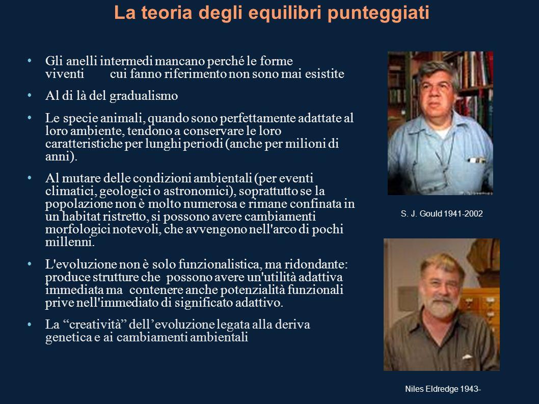 La teoria degli equilibri punteggiati S. J. Gould 1941-2002 Niles Eldredge 1943- Gli anelli intermedi mancano perché le forme viventi cui fanno riferi