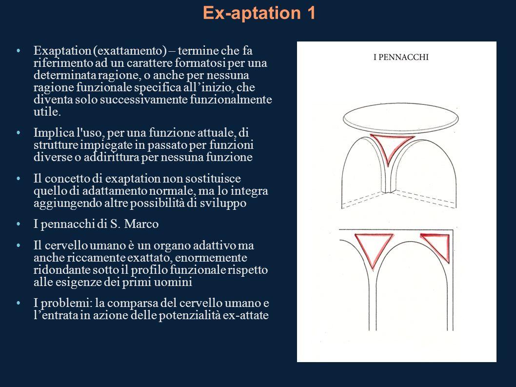 Ex-aptation 1 Exaptation (exattamento) – termine che fa riferimento ad un carattere formatosi per una determinata ragione, o anche per nessuna ragione