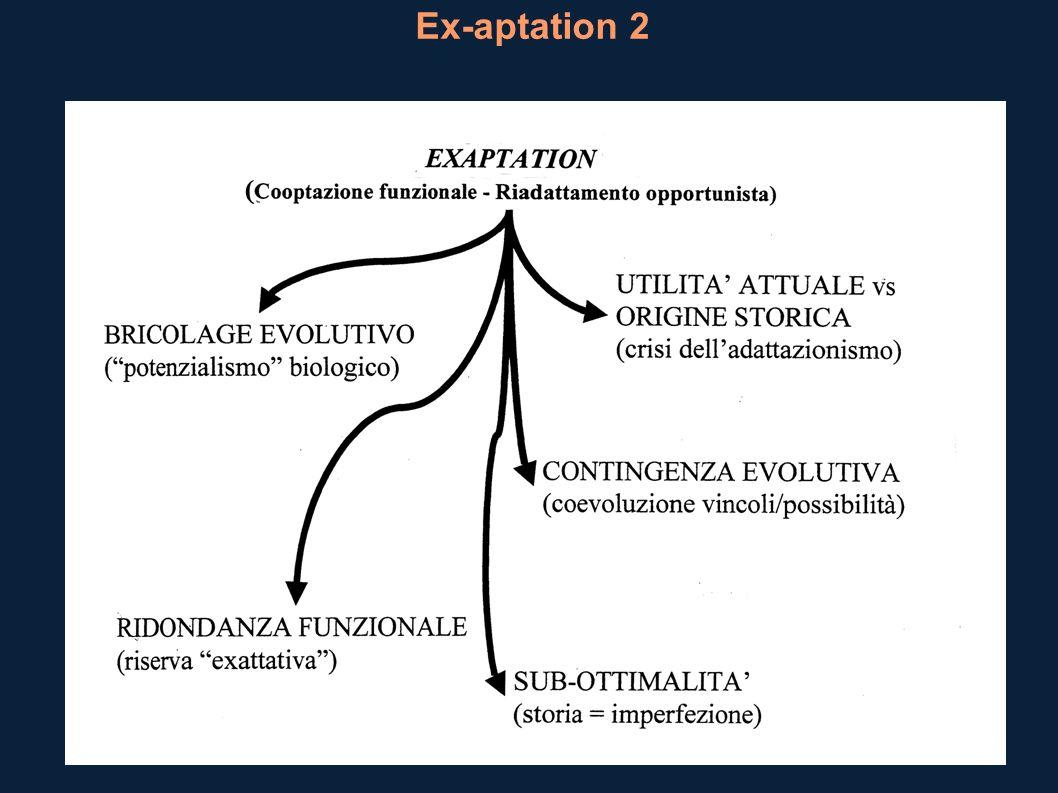 Ex-aptation 2