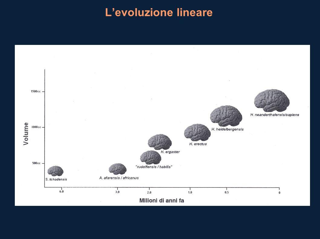 Levoluzione lineare