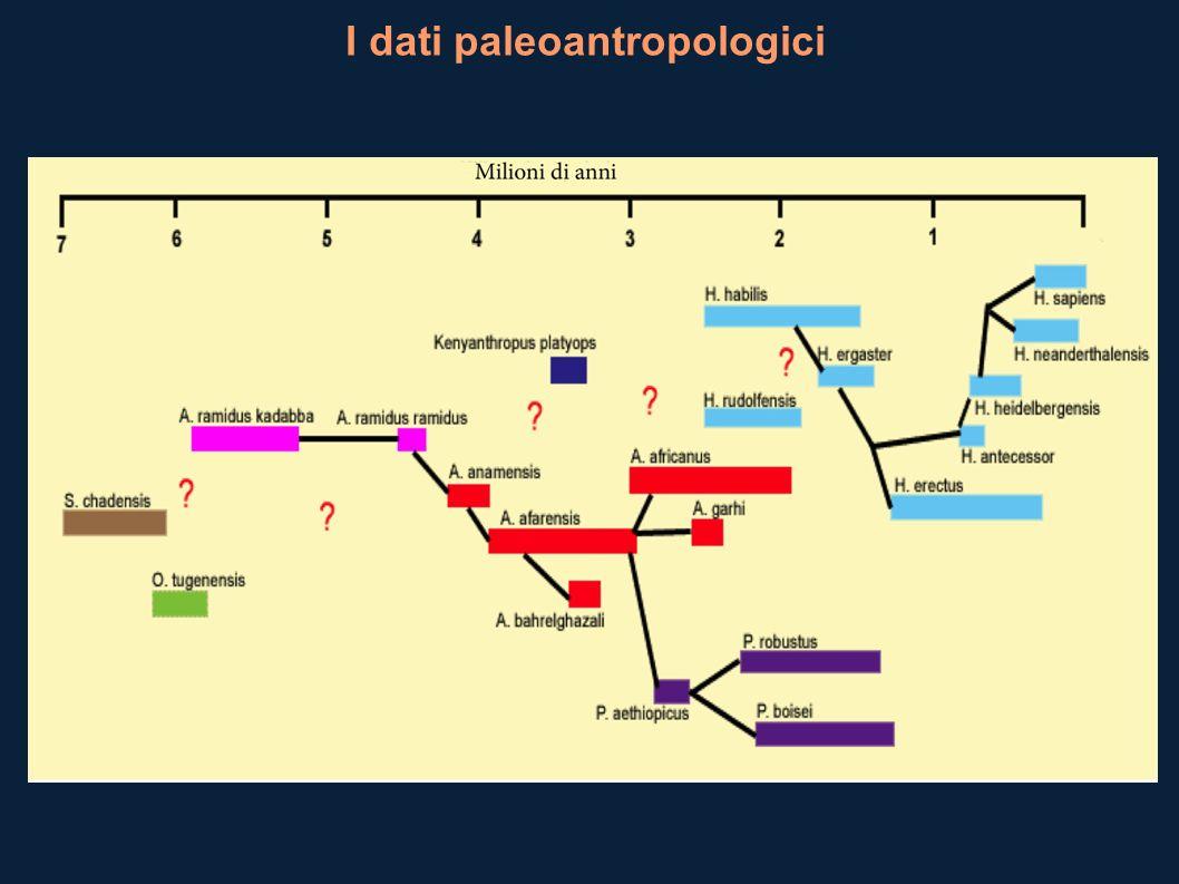 I dati paleoantropologici