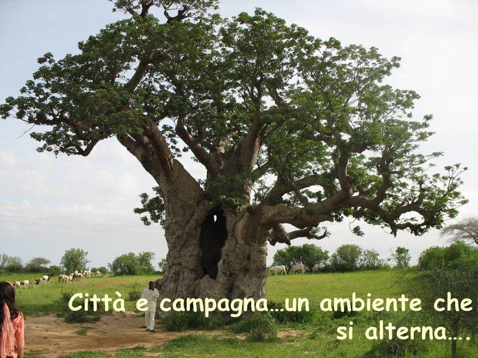 Città e campagna…un ambiente che si alterna….