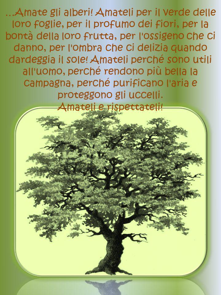 …Amate gli alberi.
