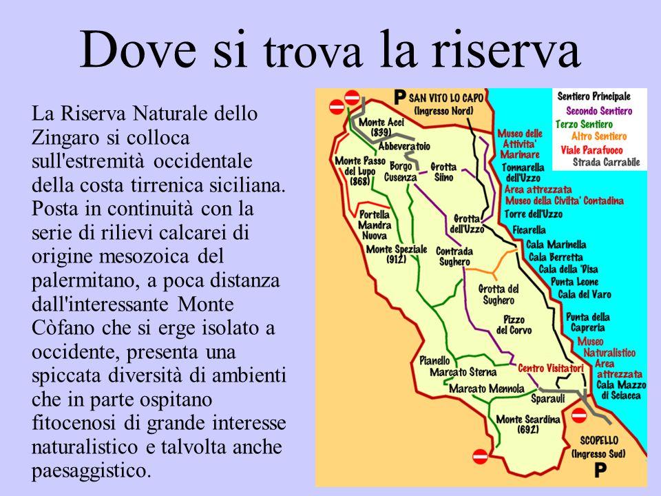 Dove si trova la riserva La Riserva Naturale dello Zingaro si colloca sull'estremità occidentale della costa tirrenica siciliana. Posta in continuità