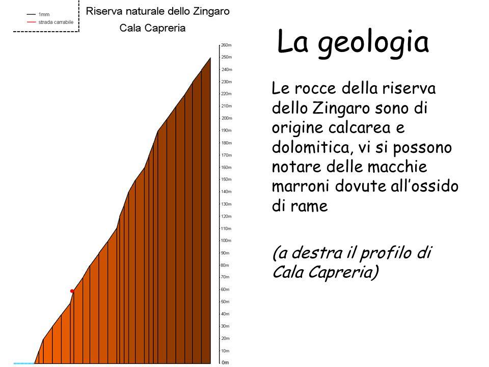 Torna allindice La geologia Le rocce della riserva dello Zingaro sono di origine calcarea e dolomitica, vi si possono notare delle macchie marroni dov
