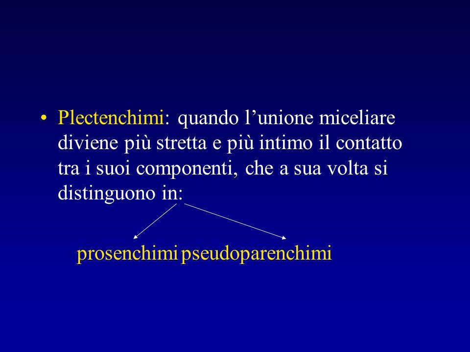 Plectenchimi: quando lunione miceliare diviene più stretta e più intimo il contatto tra i suoi componenti, che a sua volta si distinguono in: prosench