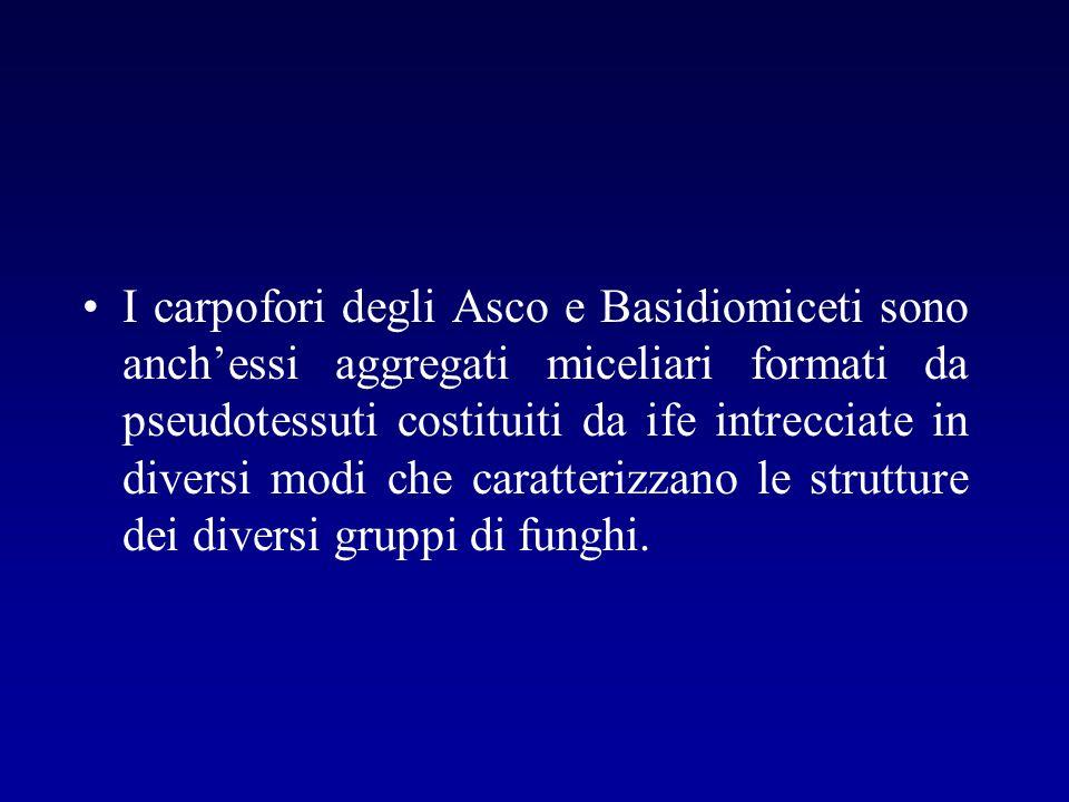 I carpofori degli Asco e Basidiomiceti sono anchessi aggregati miceliari formati da pseudotessuti costituiti da ife intrecciate in diversi modi che ca