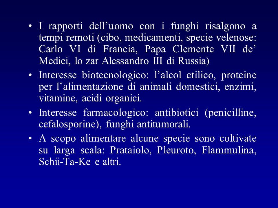 I rapporti delluomo con i funghi risalgono a tempi remoti (cibo, medicamenti, specie velenose: Carlo VI di Francia, Papa Clemente VII de Medici, lo za