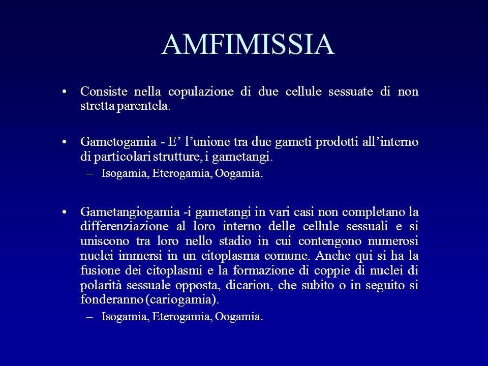 AMFIMISSIA Consiste nella copulazione di due cellule sessuate di non stretta parentela. Gametogamia - E lunione tra due gameti prodotti allinterno di