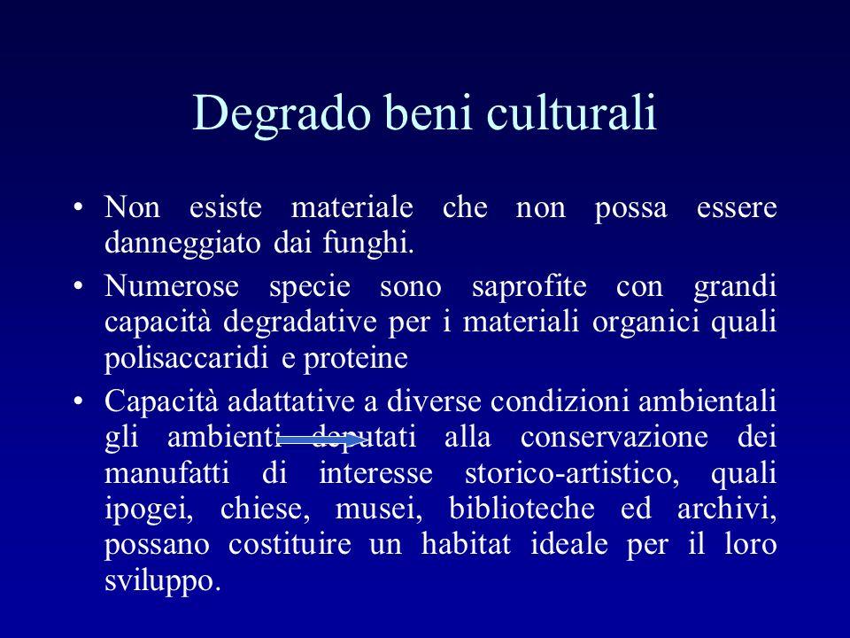 Degrado beni culturali Non esiste materiale che non possa essere danneggiato dai funghi. Numerose specie sono saprofite con grandi capacità degradativ