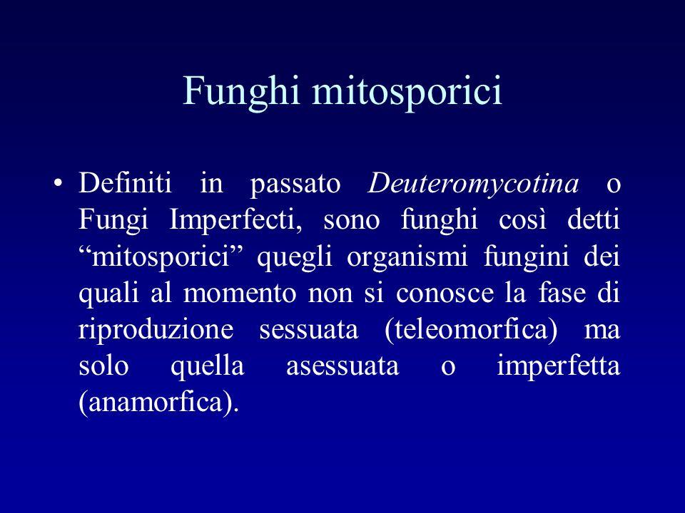 Funghi mitosporici Definiti in passato Deuteromycotina o Fungi Imperfecti, sono funghi così detti mitosporici quegli organismi fungini dei quali al mo