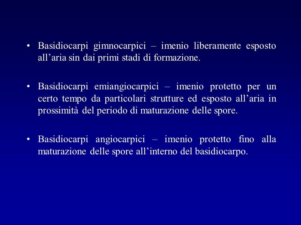 Basidiocarpi gimnocarpici – imenio liberamente esposto allaria sin dai primi stadi di formazione. Basidiocarpi emiangiocarpici – imenio protetto per u