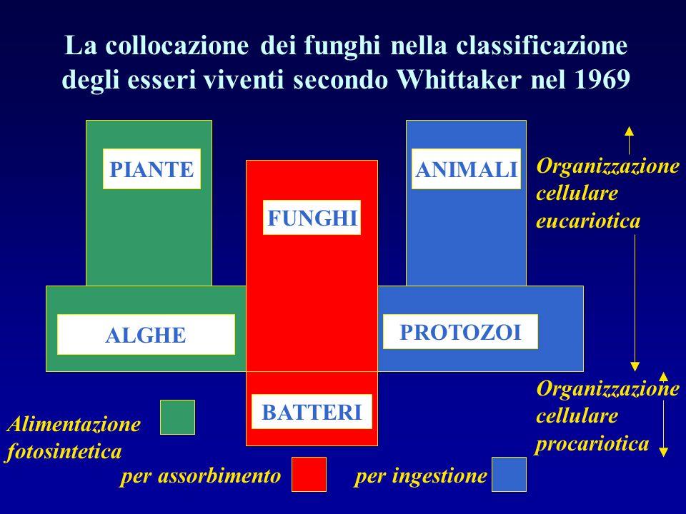 PIANTEANIMALI FUNGHI BATTERI ALGHE PROTOZOI La collocazione dei funghi nella classificazione degli esseri viventi secondo Whittaker nel 1969 Alimentaz