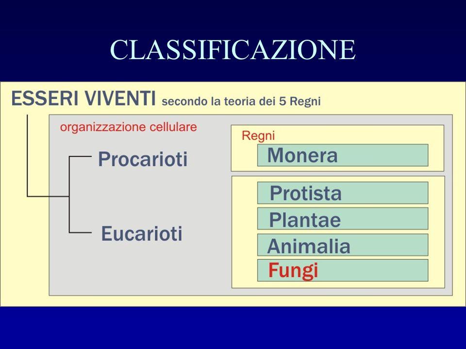 NOMENCLATURA La classificazione degli organismi viventi e fossili è compito fondamentale della tassonomia che è basata su alcuni principi ed alcune regole stabiliti nel Codice internazionale di nomenclatura botanica.