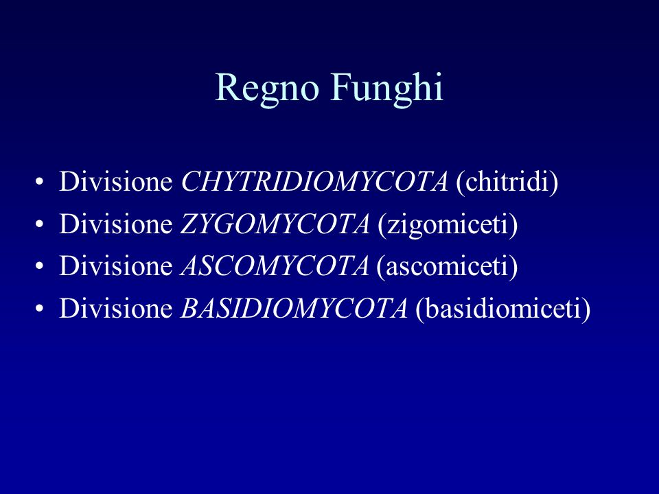 Regno Funghi Divisione CHYTRIDIOMYCOTA (chitridi) Divisione ZYGOMYCOTA (zigomiceti) Divisione ASCOMYCOTA (ascomiceti) Divisione BASIDIOMYCOTA (basidio