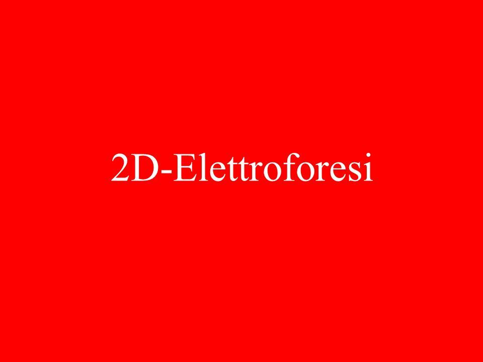 2D-Elettroforesi