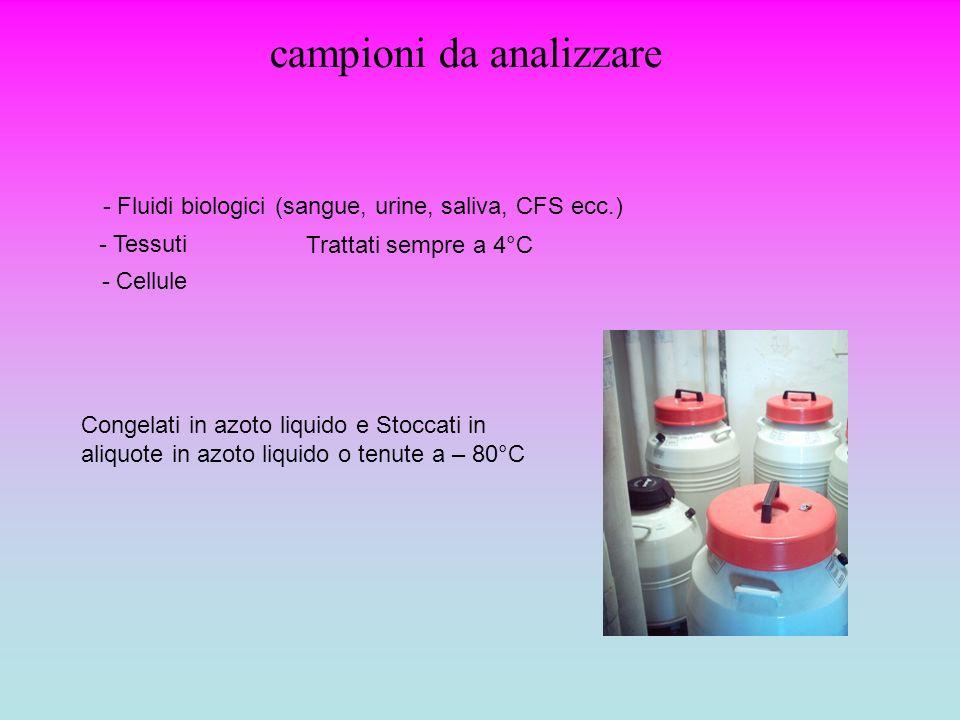 campioni da analizzare - Fluidi biologici (sangue, urine, saliva, CFS ecc.) Trattati sempre a 4°C Congelati in azoto liquido e Stoccati in aliquote in