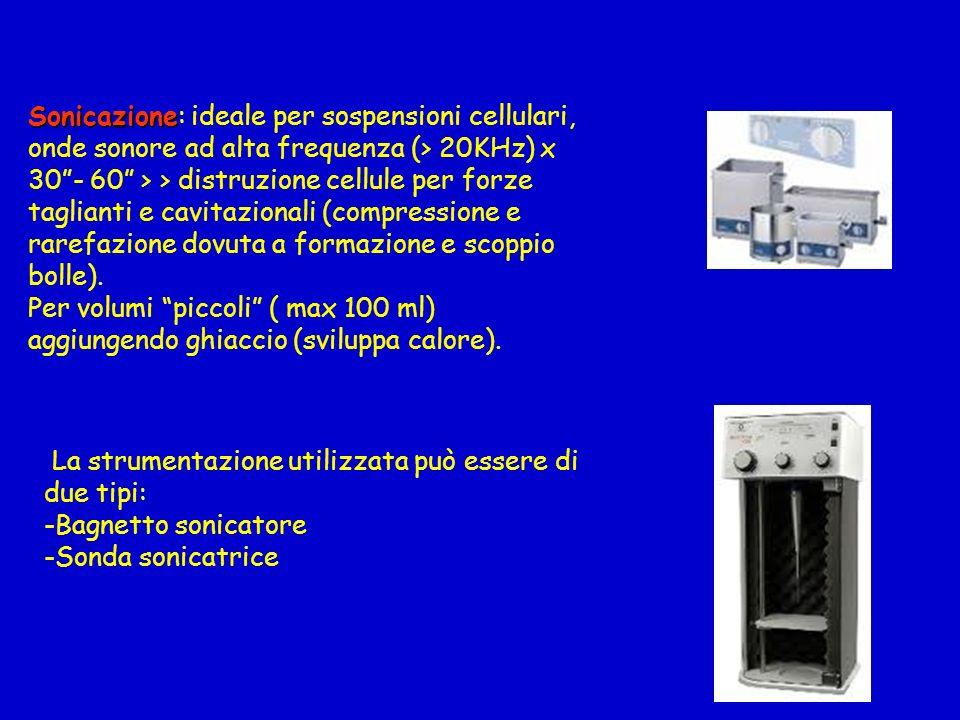 Sonicazione Sonicazione: ideale per sospensioni cellulari, onde sonore ad alta frequenza (> 20KHz) x 30- 60 > > distruzione cellule per forze tagliant