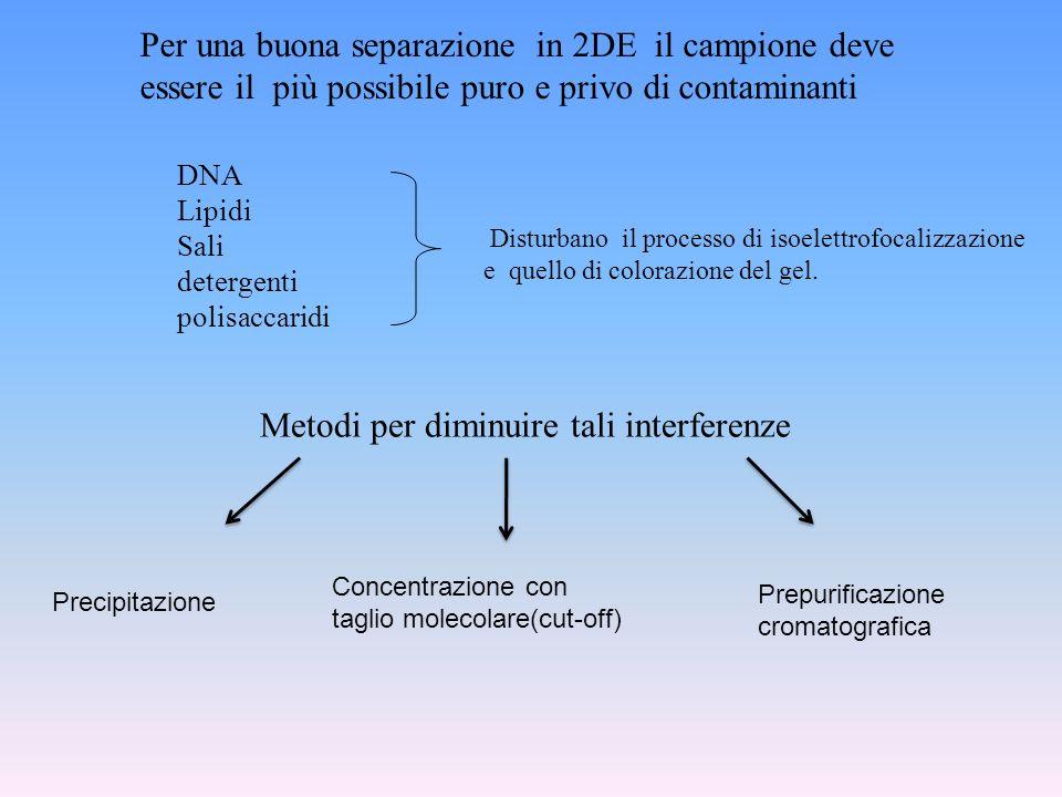 Per una buona separazione in 2DE il campione deve essere il più possibile puro e privo di contaminanti Precipitazione Concentrazione con taglio moleco