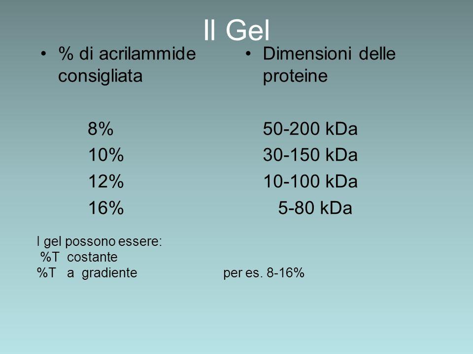 Il Gel % di acrilammide consigliata 8% 10% 12% 16% Dimensioni delle proteine 50-200 kDa 30-150 kDa 10-100 kDa 5-80 kDa I gel possono essere: %T costan