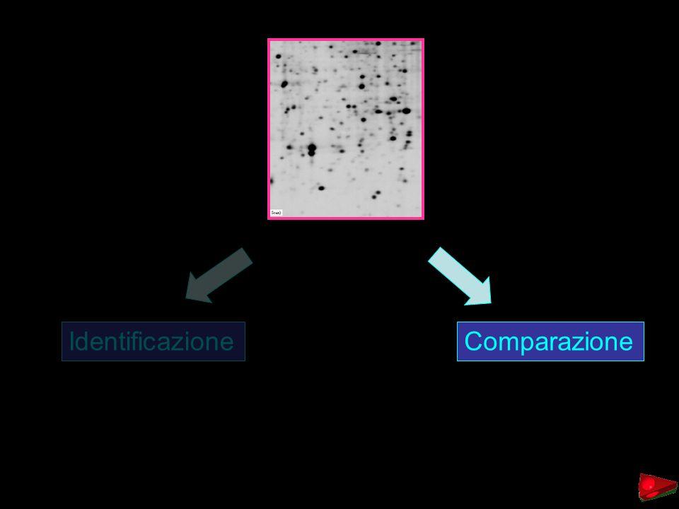 IdentificazioneComparazione
